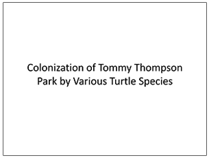 cover page of science seminar presentation on turtle species in Tommy Thompson Park