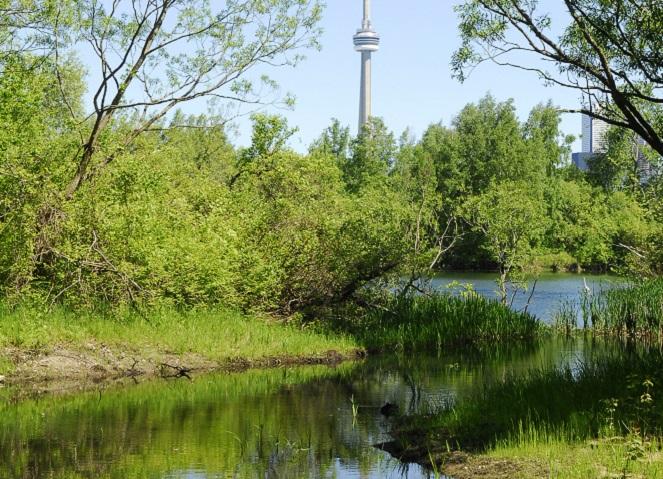 Muggs Island revitalization project