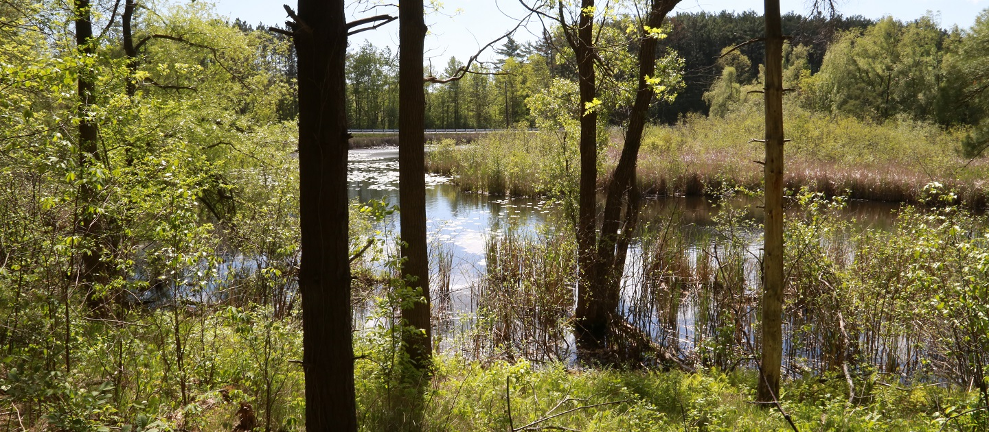wetland area in Humber River watershed