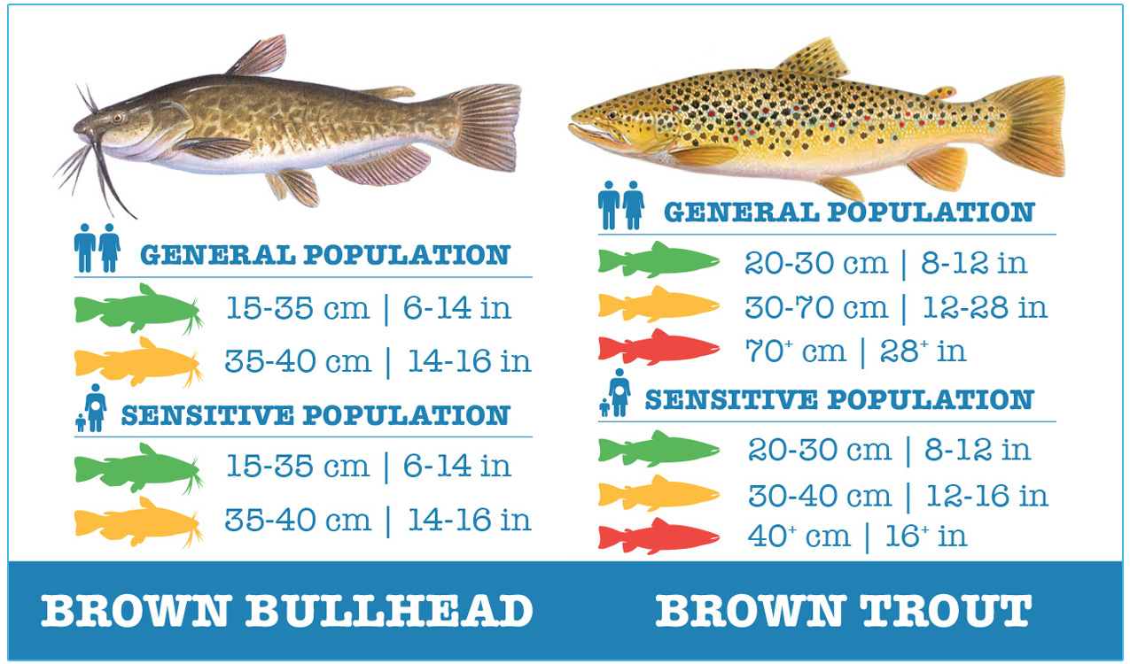 guide to safely eating brown bullhead and brown trout