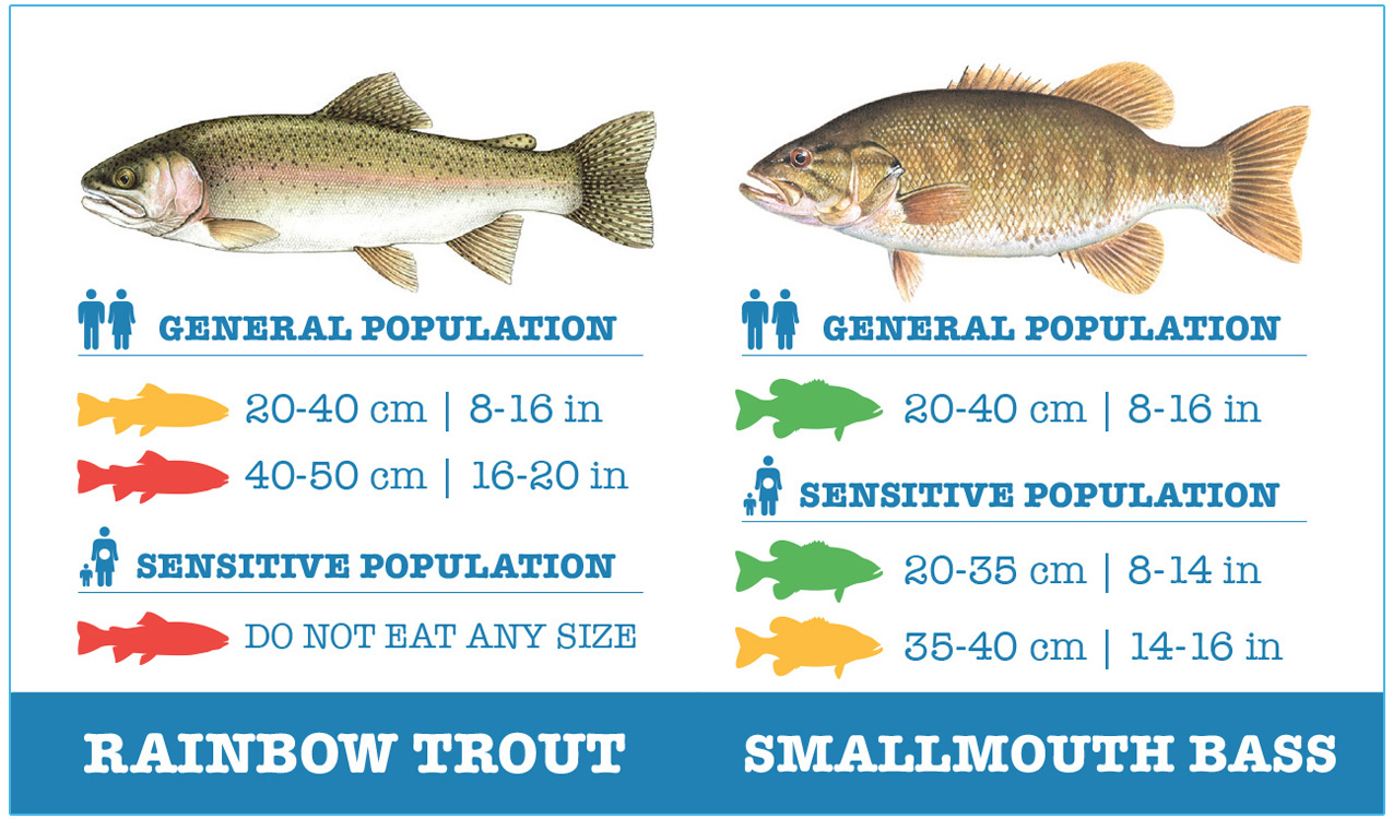 guide to safely eating rainbow trout and smallmouth bass